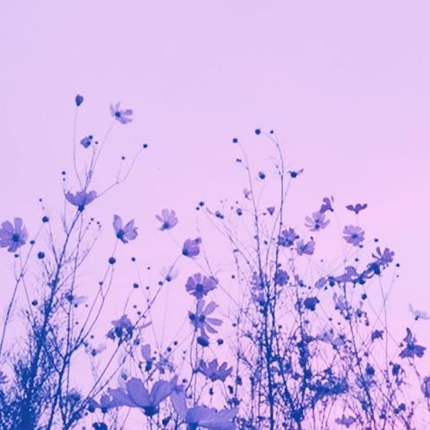 Best 25+ Pastel purple ideas on Pinterest | Lilac sky ...