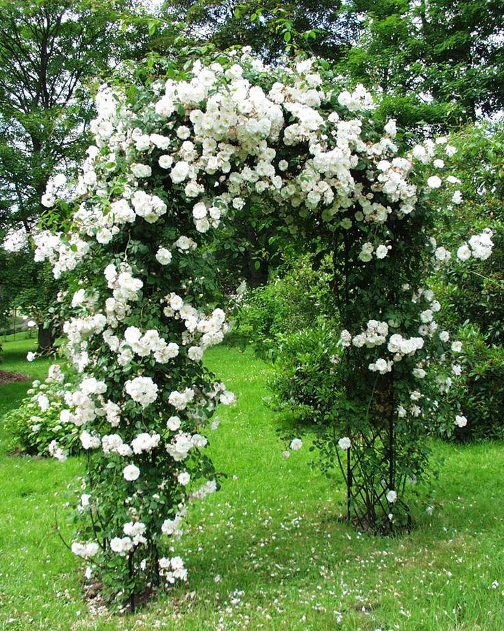 15 best Rose Arches images on Pinterest | Garden arches, Classic ...