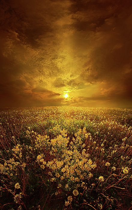 Spring Photograph - Shine On Me by Phil Koch