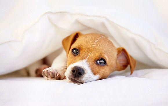 Easy Dogs / Trennungsangst bzw. Trennungsstress – Der Hund kann nicht alleine bleiben, Teil 2, Maria Rehberger, Easy Dogs Nürnberg