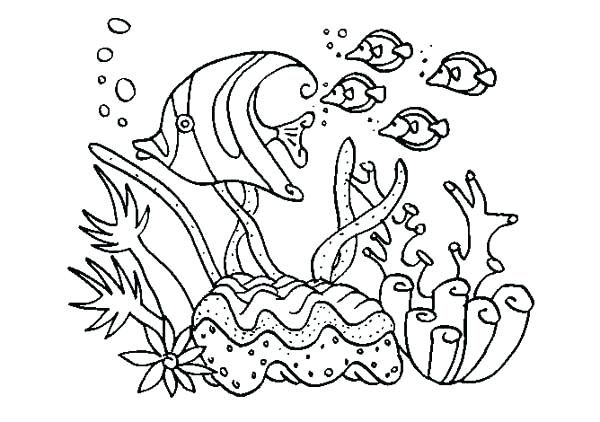 Coral Reef Drawing At Getdrawings Free Download Sketch Coloring Page Coral Reef Drawing Animal Coloring Pages Ocean Coloring Pages