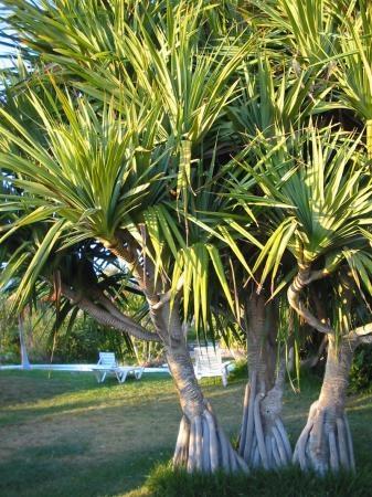 51 best Plants - Beach images on Pinterest   Backyard ...