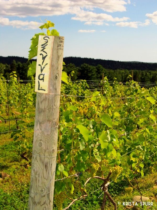 Petite Riviere Vineyards winery Nova Scotia seyval blanc