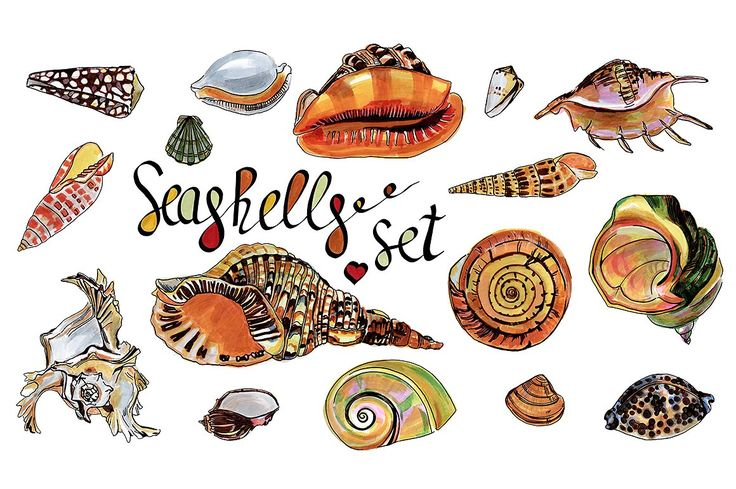 Seashells markers set by Watercolor&Illustration on @creativemarket
