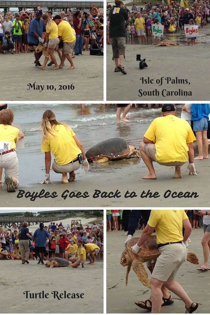 North charleston south carolina city information epodunk - So Excited That We Were Able To Witness This South Carolinapalms