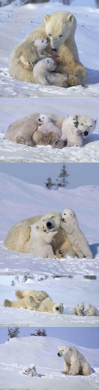Polar Bears Collection!