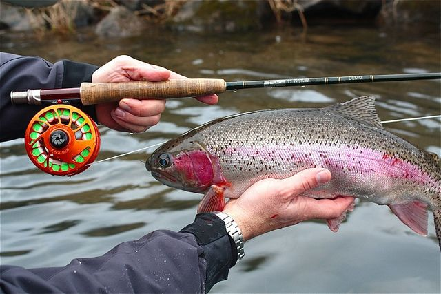 Despite low water temperatures and virtually no surface activity, fishing remains very good on the lower McKenzie River in February.