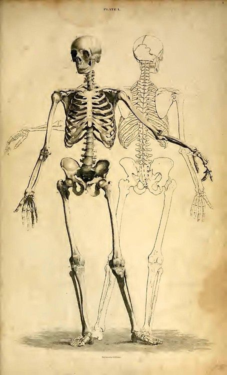 Plate I. From 'A System of Anatomical Plates of the Human Body' by John Lizars, published in Edinburgh, 1822 (https://www.pinterest.com/pin/287386019949067683).