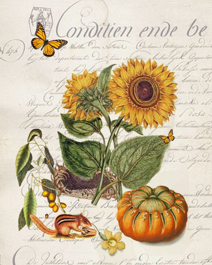 sunflower essay The sunflower: compassion and forgiveness a fact which we all have to emit is that humanity existence always creates conflicts and fighting which we call war.