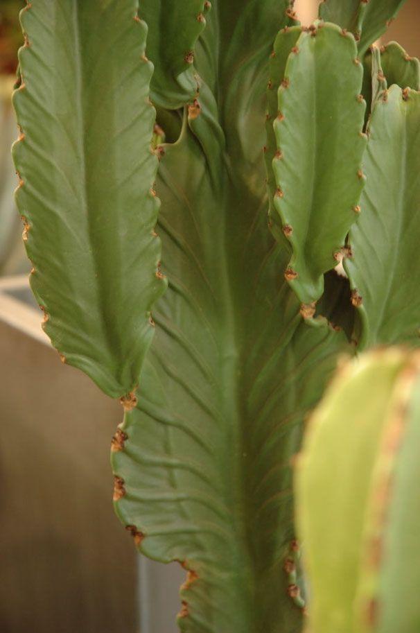 vasi e piante - Benvenuti su tullipan!
