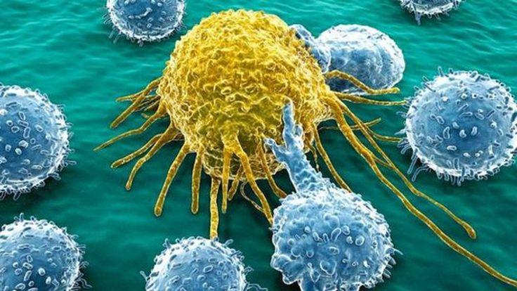 Científicos crean implante que captura las células cancerígenas - http://bit.ly/1Nf9QWO