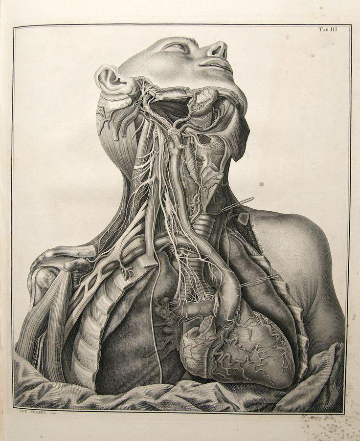 download Der weibliche Beckenboden: Funktionelle Anatomie, Diagnostik und Therapie nach der Integraltheorie 2008