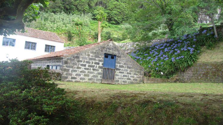 Ponte Formoso Tea Plantation - Sao Miguel Acores - Portugal