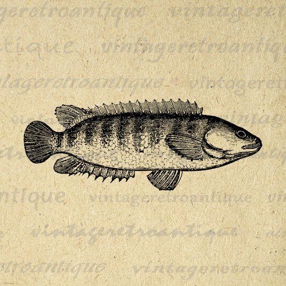 Digital Image Fish Graphic Antique Download Printable Vintage Clip Art Jpg Png Eps 18x18 HQ 300dpi No.600 @ vintageretroantique.etsy.com #DigitalArt #Printable #Art #VintageRetroAntique #Digital #Clipart #Download