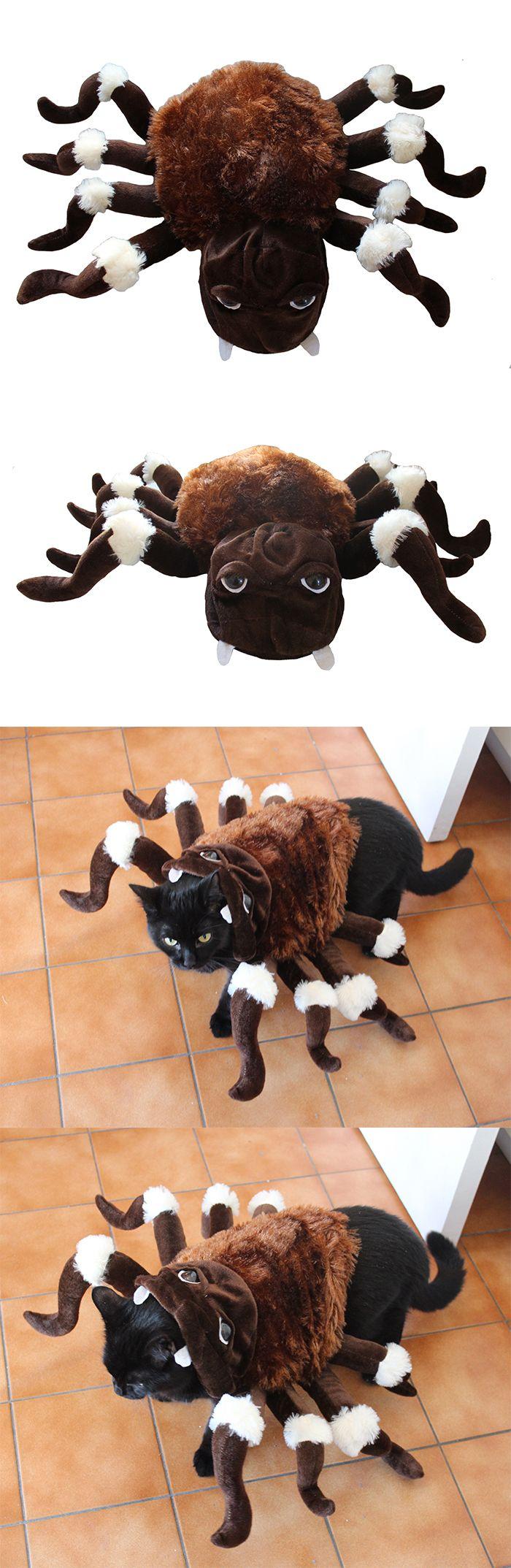 Déguisement araignée pour chien chat