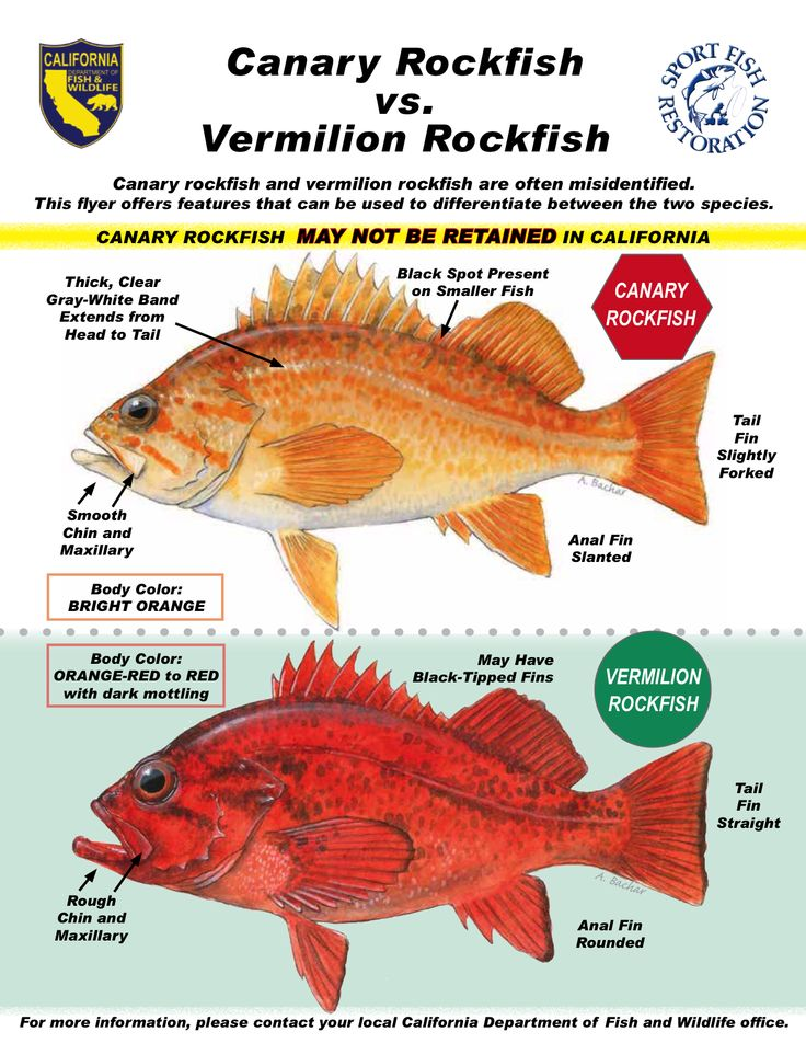 72 best images about rockfish and lingcod on pinterest for Deep sea fishing oregon coast
