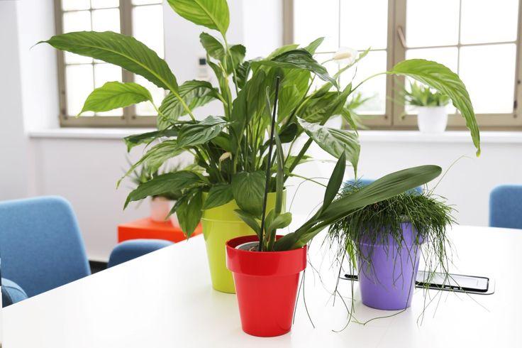 Colorful design flower pots by TeraPlast   kolorowe doniczki