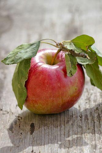 Apple by AlacarteCulinary - Krisztina Terei-Vigh