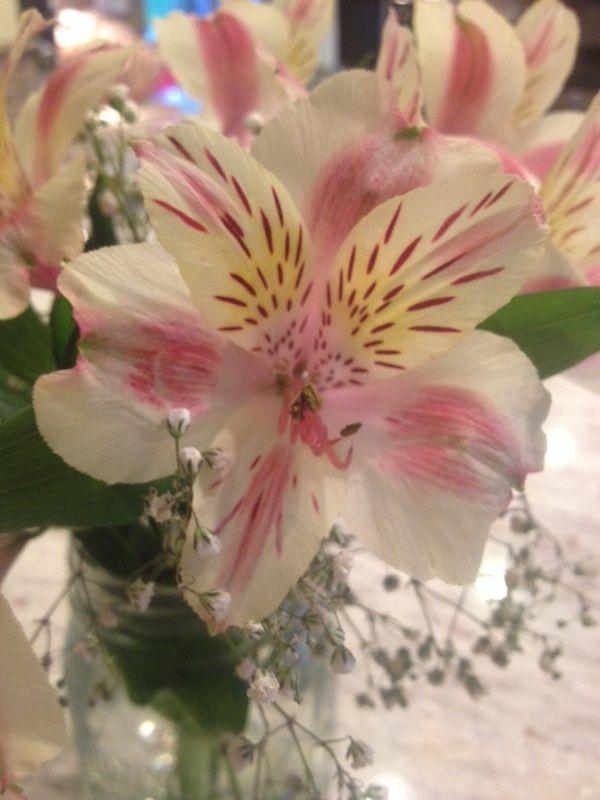 Free Plant Identification Blooming Plants Peruvian Lilies Flower Arrangements
