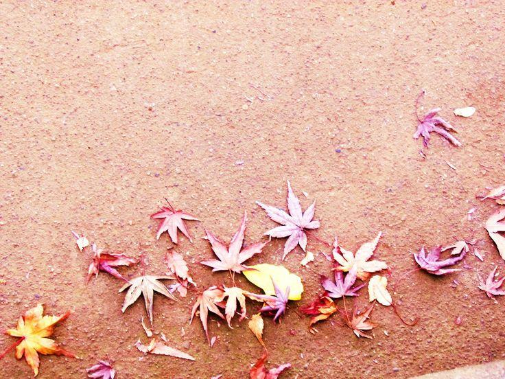 http://dunnowhatiwannado.tumblr.com  Autumn Leaves Ueno Park, Tokyo 2011