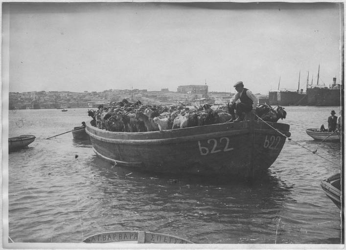 Opérateur C ; Machard, Pierre (photographe) Grèce ; Attique ; Dans le port du Pirée. Bateau transportant des chèvres