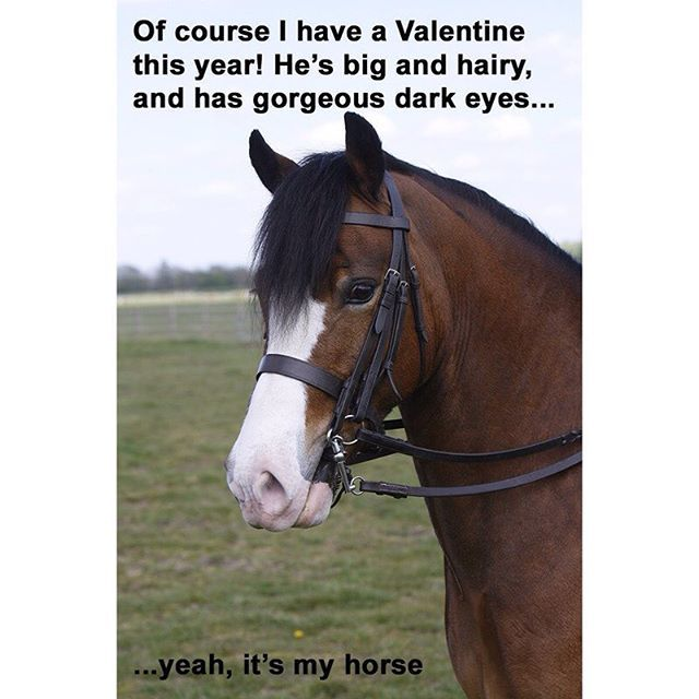 Of course I have a Valentine this year! He's big and hairy and has gorgeous dark eyes... Yeah, it's my horse