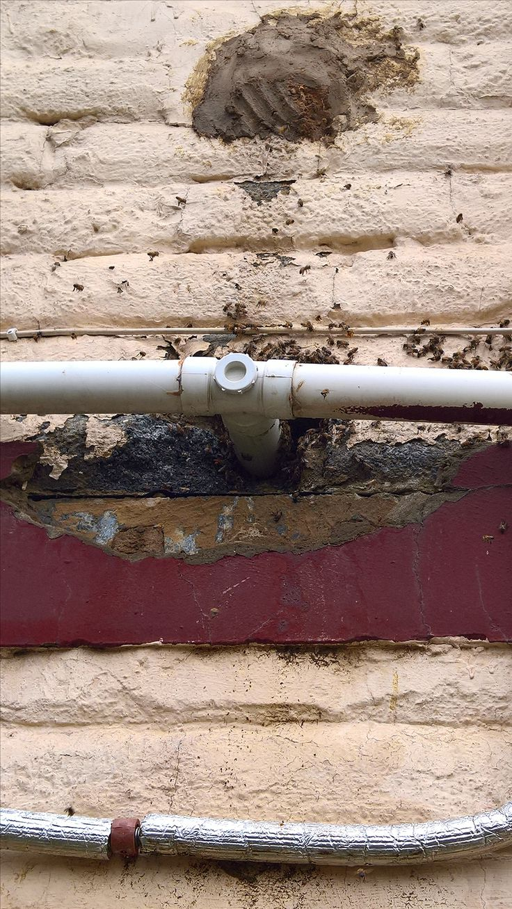 Bee-removal in Johannesburg , whole in a wall, Randburg area