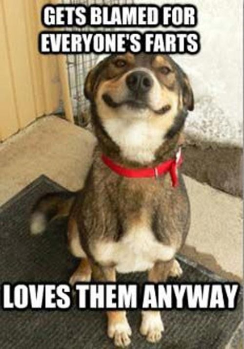 funny animal pictures with captions - Google Search