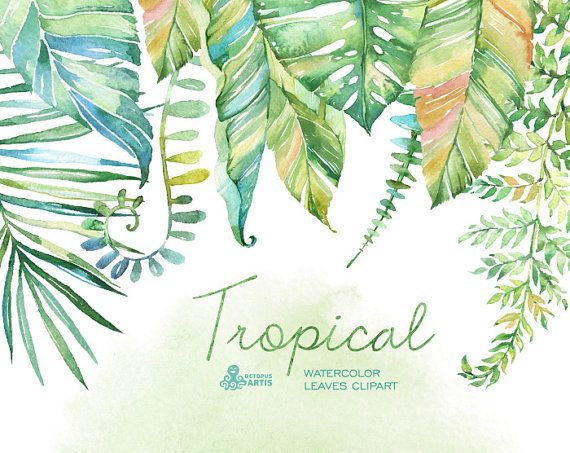 Tropical watercolor leaves. Handpainted clipart, foliage, grass, leaf, wedding…