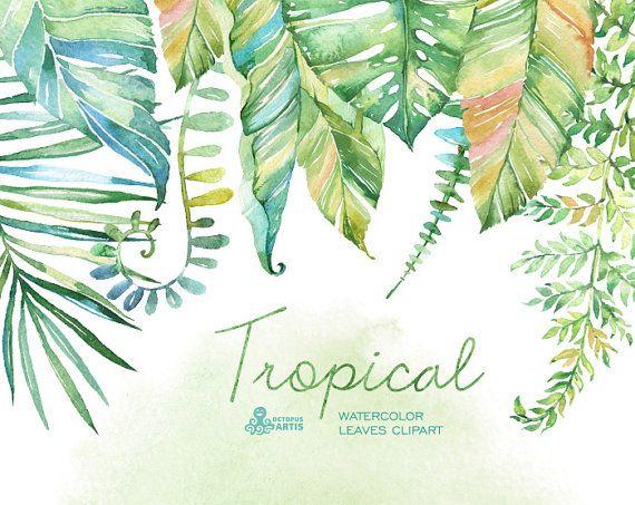 Hojas de acuarela tropical. Pintado a mano Imágenes