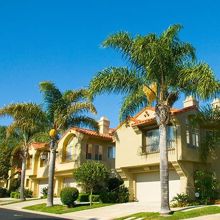 "Queen Palm ""Syagrus Romanzoffiana""  Growing Zones: 8-11 outdoors"