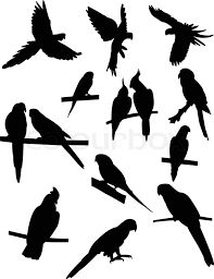 Risultati immagini per parrots tattoo