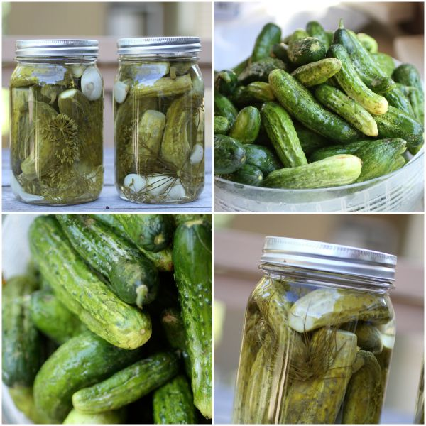 cucumber pickles @Janelle from @talkoftomatoes Easy Dill Pickle Recipe