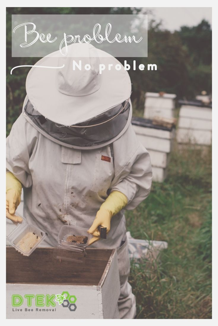 Depending On The Method Of Live Bee Removal We Use For Your Situation Our Team Of Highly Skilled Bee Repair Experts Can Bee Removal How To Remove Bee Problem