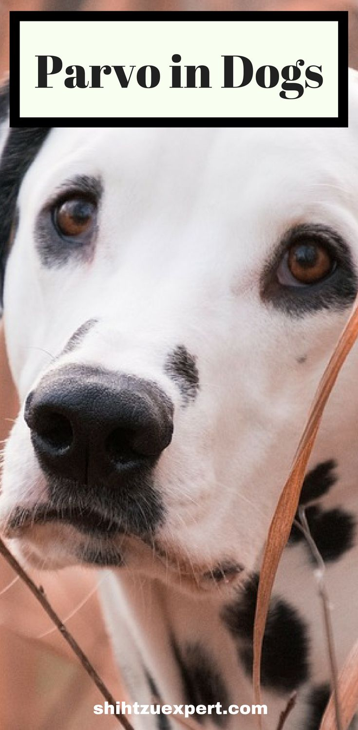 Parvo in dogs the guide to alternative treatment