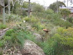Diane Cummins' Garden » Sustainable Gardening Australia