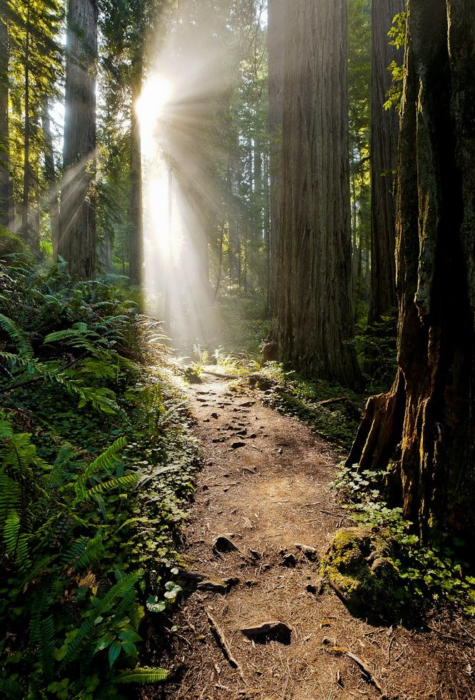 Grace by Jay Lee on 500px.. Redwoods National Park, CA