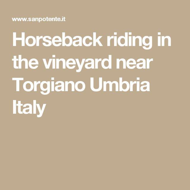 Horseback riding in the vineyard near Torgiano Umbria Italy