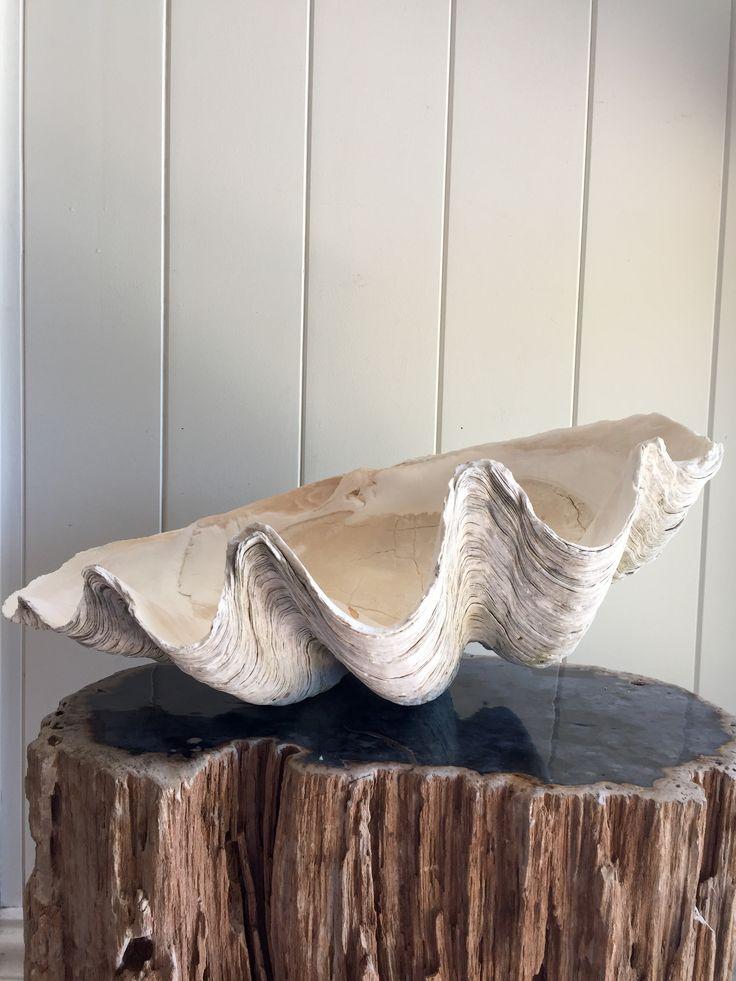 Rustic 50 cm Giant Clam