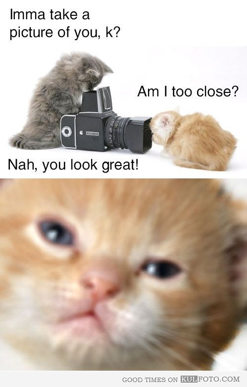 Kitten taking pictures of a cute kitty that is too close to the camera.  *