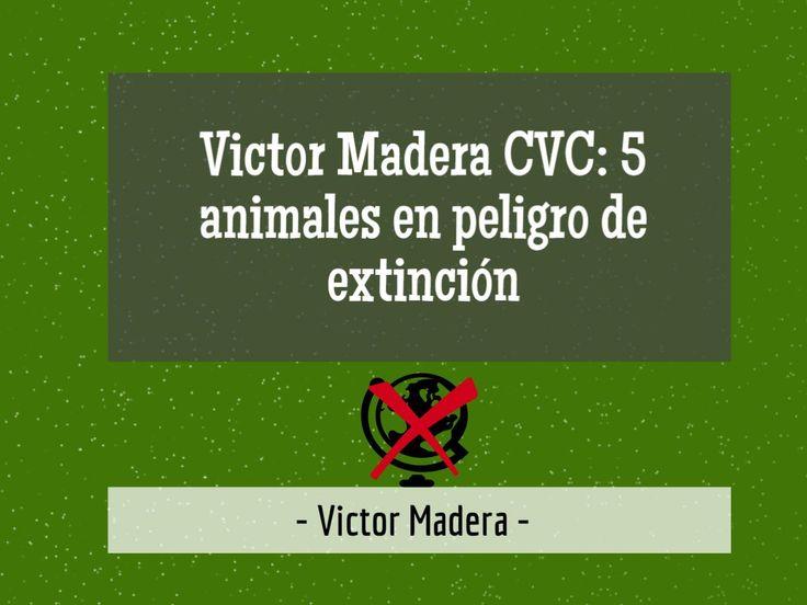 Esta semana en mi blog Victor Madera Vet, os traigo otro post sobre Cavilaciones de un Veterinario Consternado (CVC). ¡Estamos poniendo en peligro muchos animales! ¿Lo vemos? http://victormadera.blogspot.es/1500377481/victor-madera-cvc-5-animales-en-peligro-de-extincion/