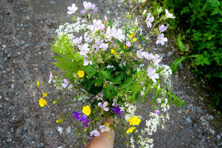Wild flowers | Parikkala, Finland