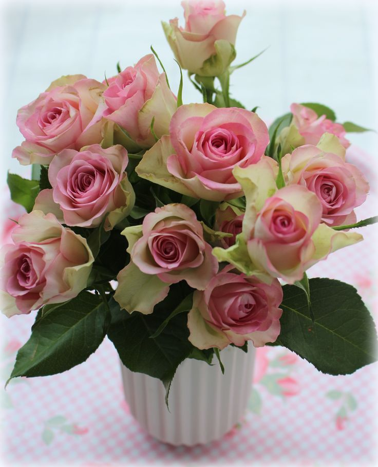 rose fresh