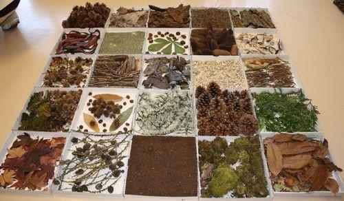 Mosaïque d'éléments naturels