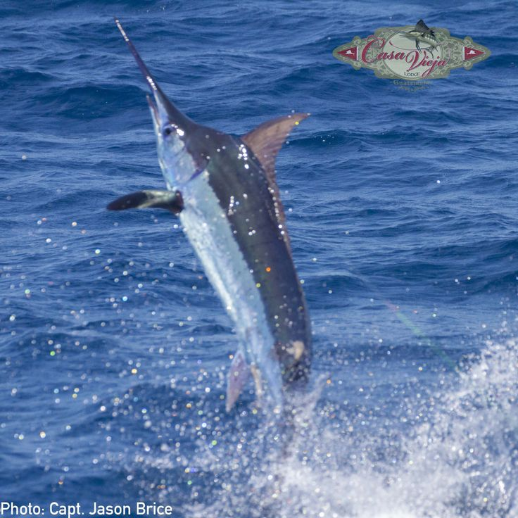 127 best images about the fishing on pinterest fishing for Best deep sea fishing