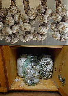 Пять лучших способов хранения свежего чеснока | Дачный участок