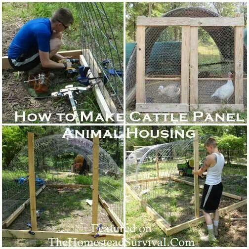 10 best images about duck pen ideas on pinterest chicken for Build your own duck house