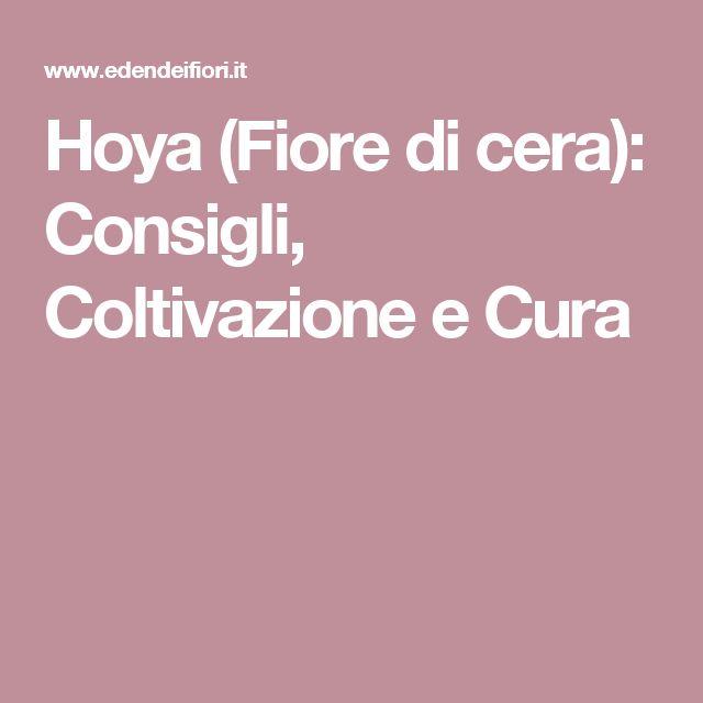 Hoya (Fiore di cera): Consigli, Coltivazione e Cura