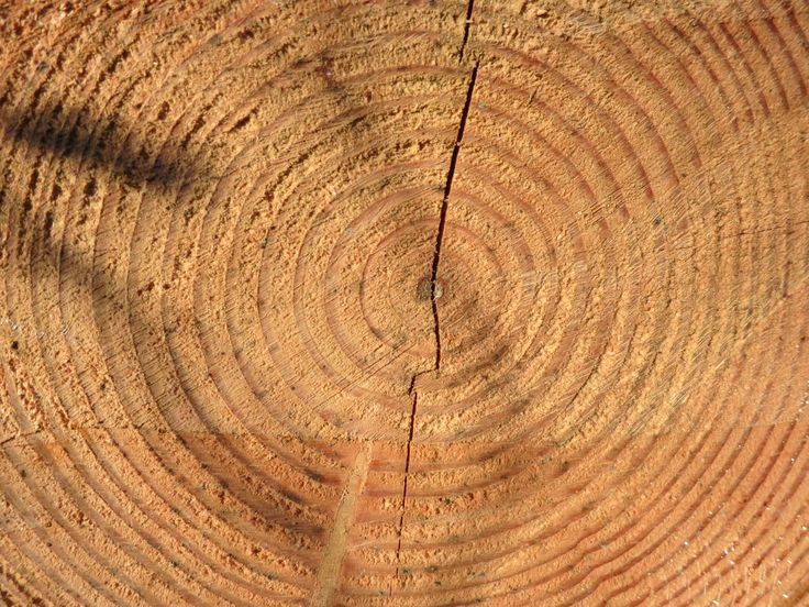 Growth Rings Tell a Story