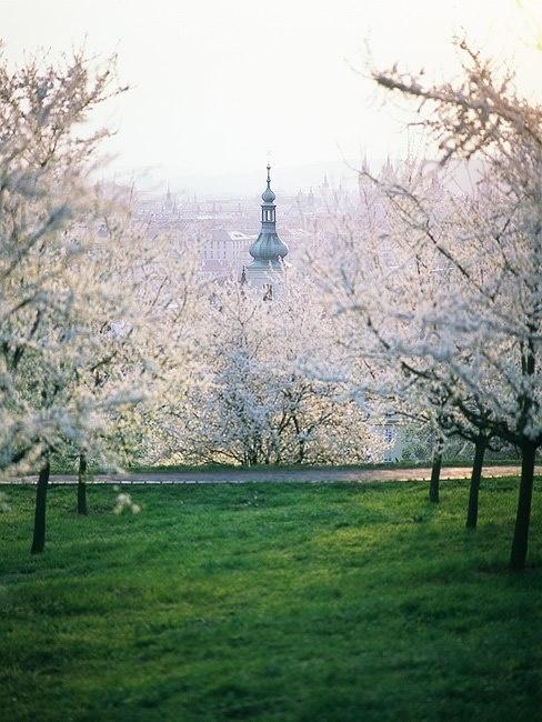 Petrin park I Prague I www.iconhotel.eu